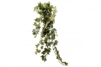 ivy bush for weddings, events and arrangements from GT Sundries