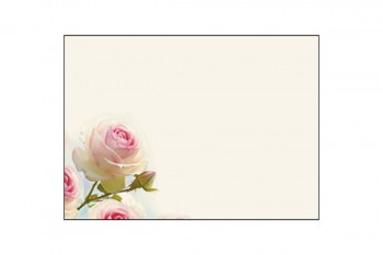 White & Pink Rose on Cream Background Card